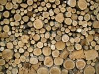Modificări privind determinarea prețurilor de referință pentru masa lemnoasă din fondul forestier proprietate publică