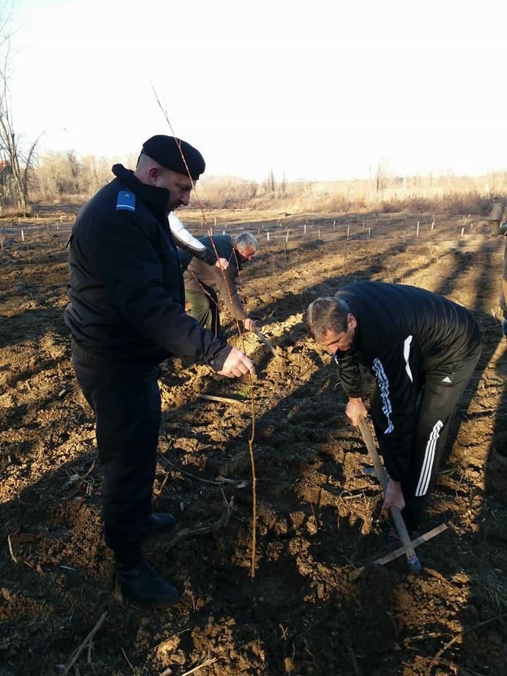 Zeci de jandarmi implicați într-o acțiune de împădurire pe raza județului Mehedinți